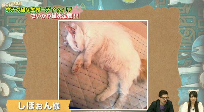 猫決定戦 4jpg