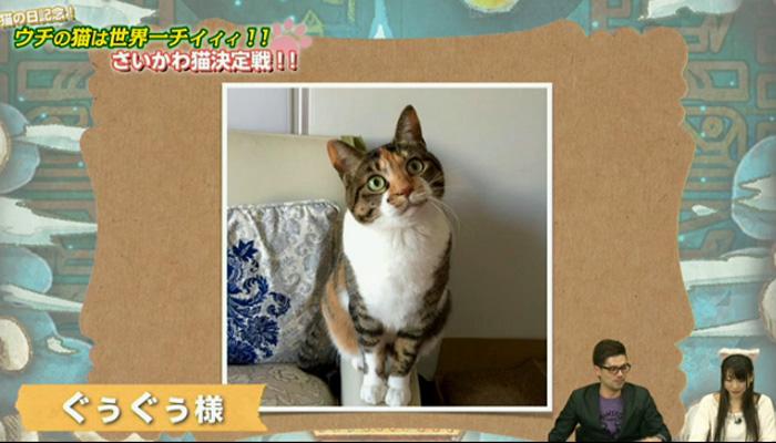 猫決定戦 3