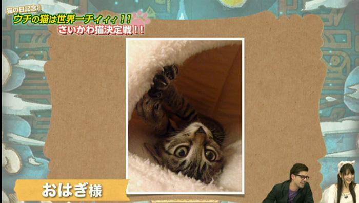 猫決定戦 2jpg