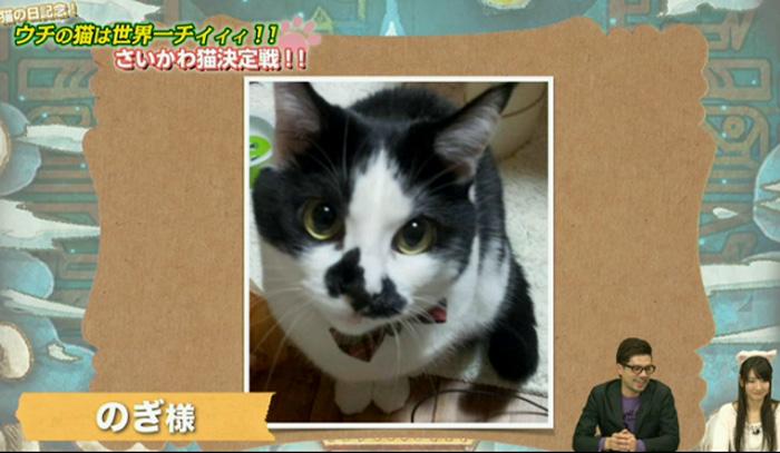 猫決定戦 7