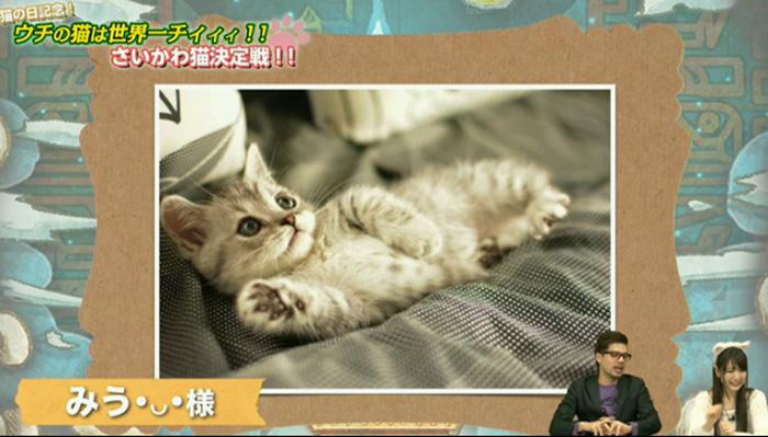 猫決定戦 9