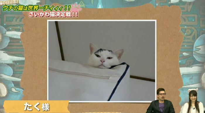猫決定戦6