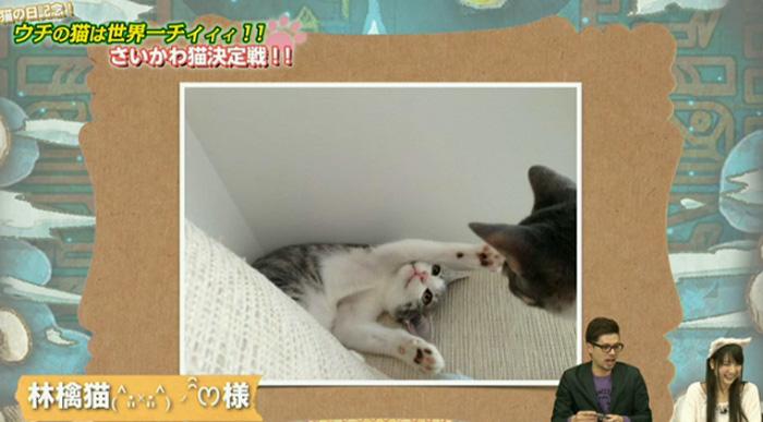猫決定戦 12
