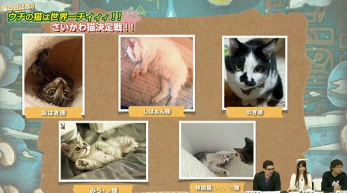 猫決定戦 15