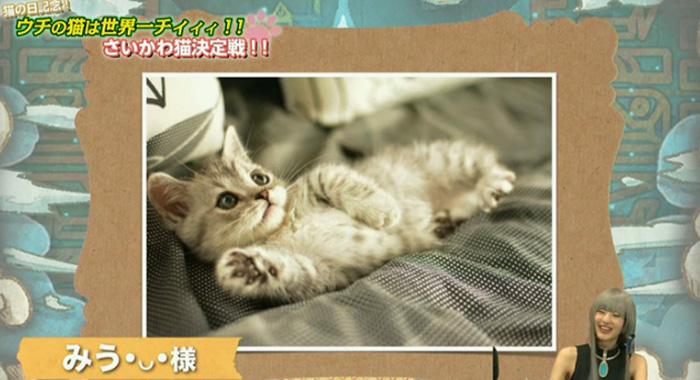 猫決定戦 16
